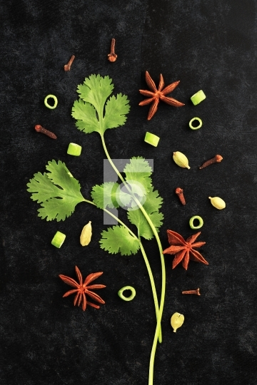Fresh Herbs Coriander Leaves with Star Anise on Black Background