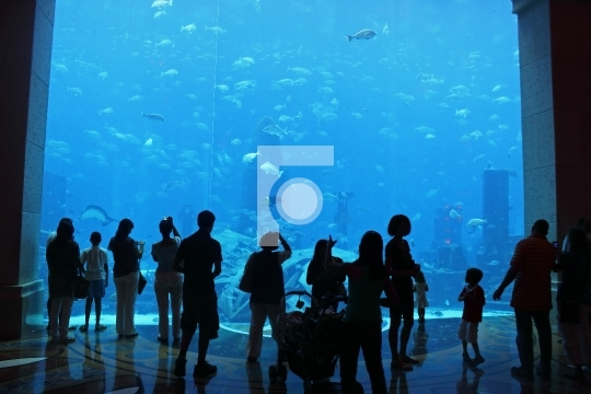 People enjoying Aquarium fishes