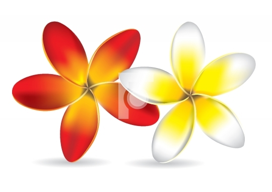 Beautiful Frangipani Flowers - Vector Illustration