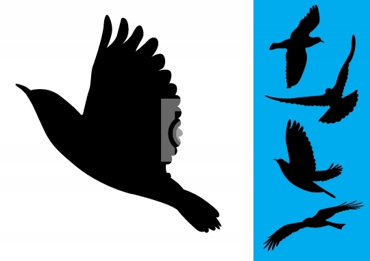 Birds in flight - Vector Illustrations