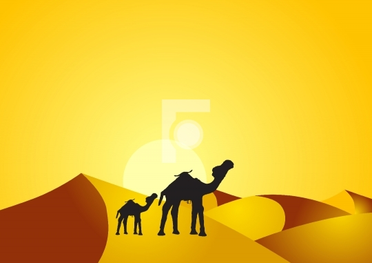 Camel and baby camel in the desert