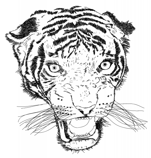 Detailed Tiger Face Vector Illustration - Handmade