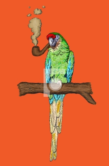 Smoking Pipe Macaw Parrot Vector Illustration
